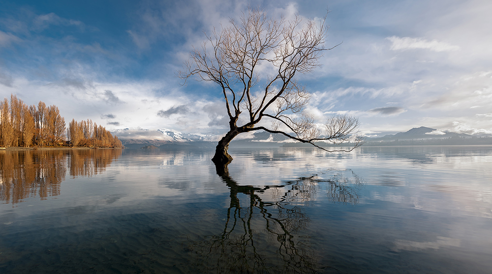 A local landmark - 'that Wanaka tree'